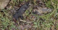 Erschlagene Welpen in Kamp Lintfort  gefunden