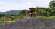 ?Kräutergarten Klostermühle? –  blaue Lavendelfelder – erstes Lavendelfest der Pfalz