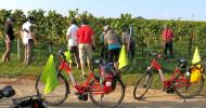 Weinlese   in  der  Pfalz  mit  E-Bike erleben