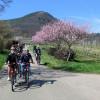 Pedelec-Ausflüge zur Mandelblüte in der Pfalz