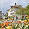 Tulpen, Krokus, Stiefmütterchen, Wildkräuter & Co.:  Außergewöhnliches Blütenspektakel von März bis Mai