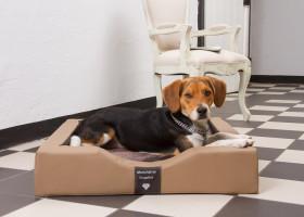 GEL-Betten jetzt auch für Hunde!