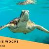 Fairaway organisiert plastikfreie Woche als Challenge im Rahmen der Europäischen Nachhaltigkeitswoche 2018