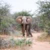 100 wilde Elefanten werden vom 9. September bis Ende Oktober 2018 in Simbabwe von der Sango Wildlife Conservancy in die Rifa Safari Area umgesiedelt (FOTO)