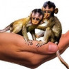 Alzheimer/Demenz und genetisch veränderte Affen