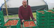 Umweltfreundliche Alternativen zur industriellen Landwirtschaft (FOTO)