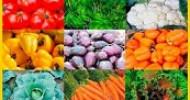 Lernen Sie Vegetarismus besser verstehen