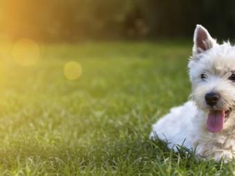 Rechtzeitig aufs Hundeherz hören / Frühzeitig diagnostiziert lassen sich Auswirkungen von Herzerkrankungen spürbar mildern (FOTO)