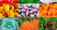 Vegetarisches LOW CARB – 50 Rezepte
