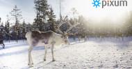 Pixum startet großen Online-Adventskalender und verlost Traumreise nach Schwedisch Lappland (FOTO)