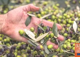 Natives Olivenöl extra: die EU-Gütesiegel