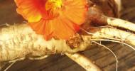 Aktuelle Studie zeigt: Wer pflanzliche Erkältungsmittel einnimmt, braucht weniger Antibiotika (FOTO)