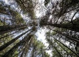 Waldbaden ist mehr als Spazierengehen: Wer bewusst die Wunder der Natur wahrnimmt,  der fördert die Gesundheit