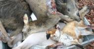 Für die Mülltonne jagen: Die Doppelmoral des Jagdpräsidenten (FOTO)