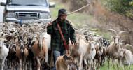 Im Einklang mit der Natur: ZDF-Doku begleitet Ziegen-Hirtin (FOTO)