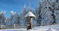 Abstand gewinnen im mächtigen Böhmerwald INNs HOLZ – (Er)leben inmitten purer Natur