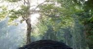 """Neuer """"Tree Room"""" bei der Arte Sella im Valsugana"""