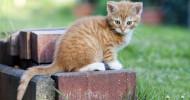 Regelmäßige Impfung schützt Hund und Katze ein Leben lang / Die Impfung ist wichtiger Bestandteil der Gesundheitsvorsorge bei Klein- und Heimtieren, und zwar lebenslang (FOTO)