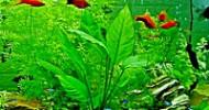 Aquarium Außenfilter – perfekte Filterleistung für große Aquarien