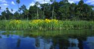 Mit dem Smartphone durch Sarasota and Her Islands