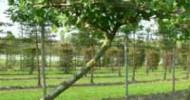 Außergewöhnliche Heckenpflanzen und Gehölze für einmalige Atmosphäre im Garten