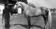 Krim-Heilschlamm ist für Pferde-Gelenke Balsam