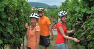 Bunte Herbstlandschaft  an der Deutschen  Weinstraße  bei Radtouren erleben und genießen